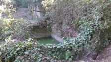 Bassa a la font de la Torra